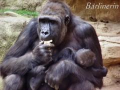 l-affen gorilla baby 2
